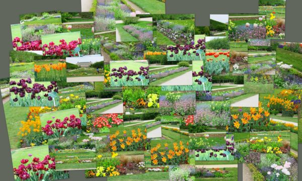 composition,plantes,fleurs,dans parc au printemps
